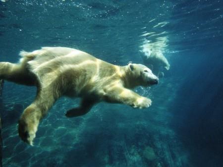 Обоняние медведя - самое чуткое на Земле
