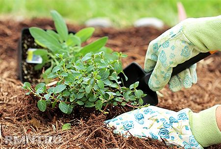 Органическое земледелие. Шансы спасти планету