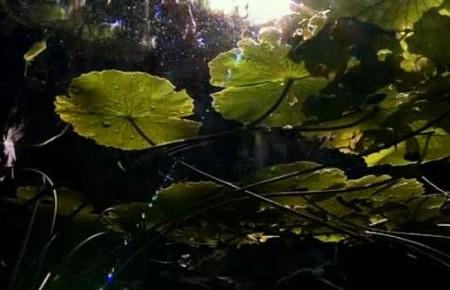 Сеноты – удивительные экосистемы