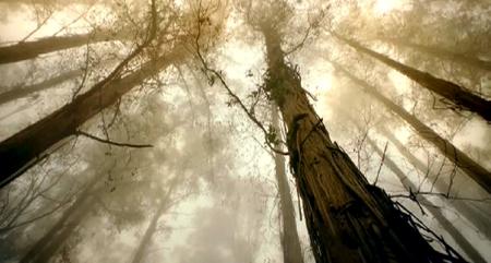 Огромная высота дерева