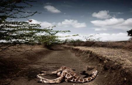 Разрушение природы человеком. Ужасающие тенденции современности