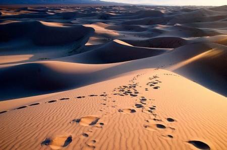 Пустыня Гоби. Обитатели, приспособившиеся к суровым условиям