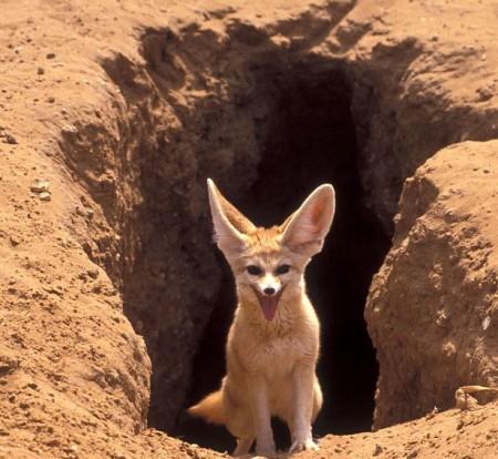 Животные Сахары: неимоверные виды в сердце пустыни