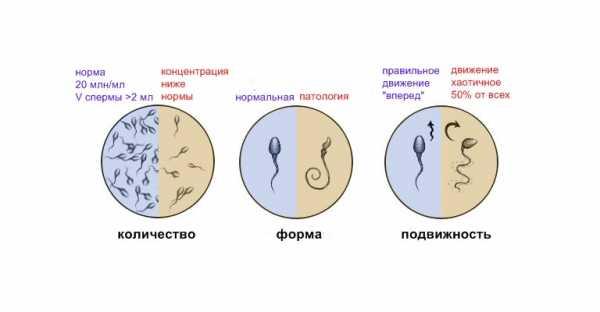 При половом акте парень выделяет сперму
